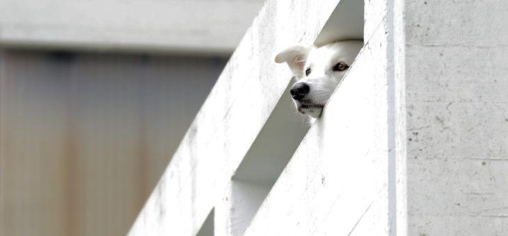 Betonové ploty jsou bezúdržbové a stylové