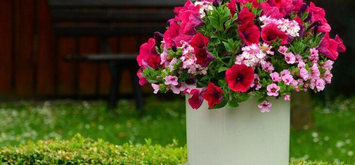 Toužíte po květinové zahrádce? Udělejte si ji pod altánem, pergolou či na balkoně